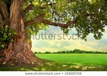 Lone tree and green field Stock photo © hraska