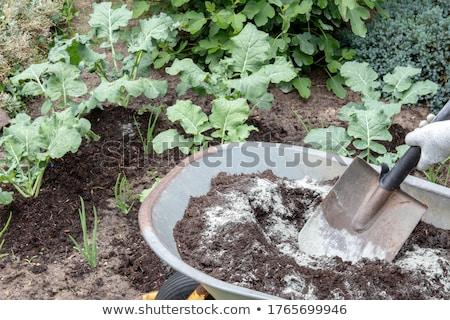 fresh organic Broccoli and Humus Stock photo © Klinker