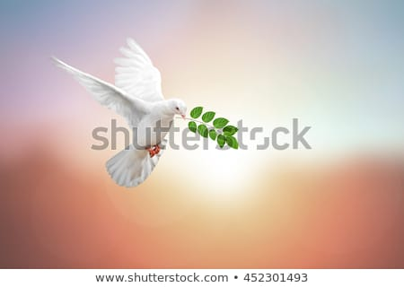 голубя оливкового иллюстрация небе облака птица Сток-фото © adrenalina