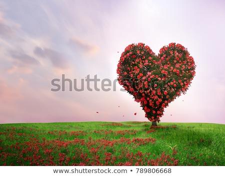 цветок · сердце · небе · ярко · трава · закрывается - Сток-фото © rufous