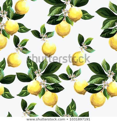 Vintage citron étiquette style nature Photo stock © ConceptCafe