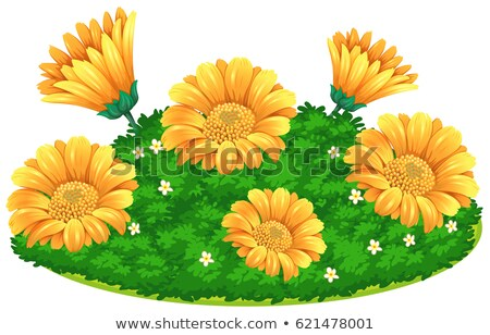 Calendular flowers in bush Stock photo © bluering