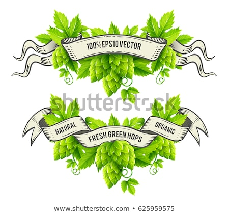 Fresh hop plants with green leaves and outline ribbons vector Stock photo © LoopAll