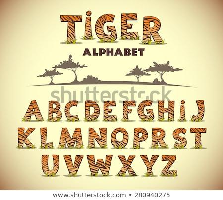 Betűtípus terv szó állatkert illusztráció háttér Stock fotó © bluering