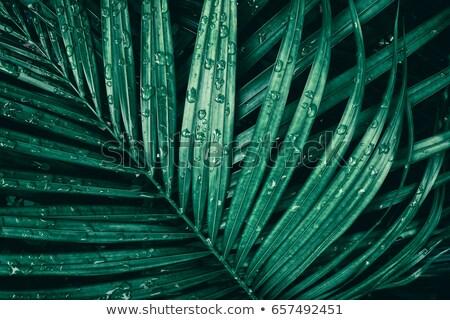 verde · água · doce · gotas · natureza - foto stock © simply