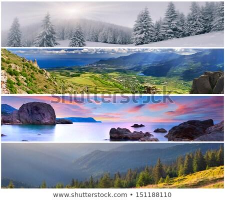 ingesteld · vier · Blauw · sneeuwvlokken · vector · eps - stockfoto © milsiart