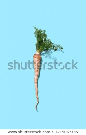 Orgánico perejil raíz hojas azul patrón Foto stock © artjazz