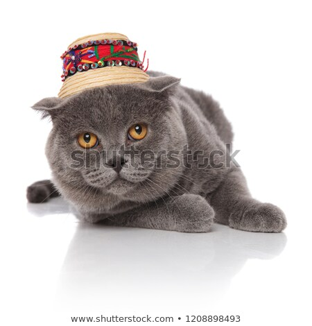 grey scotish fold wearing a straw hat lying Stock photo © feedough