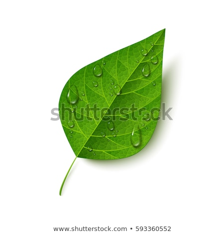 Water drop and green leaf isolated on white background. Vector cartoon close-up illustration. Stock photo © Lady-Luck