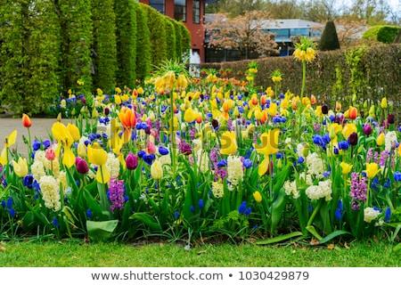 花壇 · 草 · 青空 · 庭園 · フィールド · 雲 - ストックフォト © neirfy