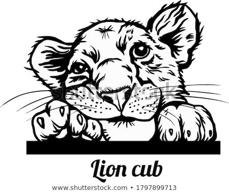 Cartoon Lion Cub Peeking Stock photo © cthoman