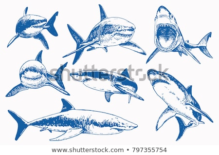 синий · акула · изолированный · белый · вектора - Сток-фото © Lady-Luck