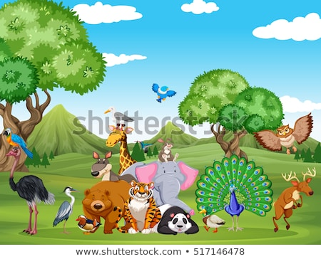 Panda in forest scene Stock photo © bluering