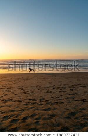 coastal scenery around San Francisco Stock photo © prill