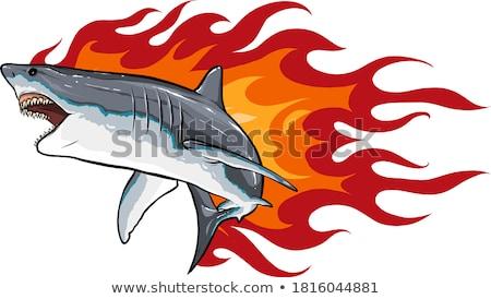 cute · rekina · ilustracja · cartoon · zwierząt · pływanie - zdjęcia stock © cidepix