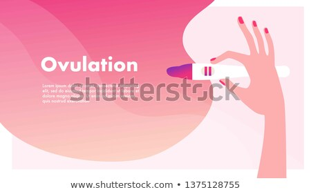 Symptomps Of Pregnancy Infographic Banner Vector Stock photo © pikepicture