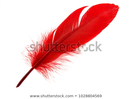 Red Feather Stock photo © AlphaBaby