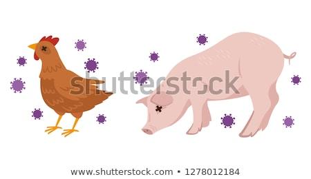 Swine flu Red White Stock photo © hlehnerer