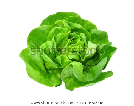 saláta · keret · friss · ropogós · zöld · piros - stock fotó © ivonnewierink