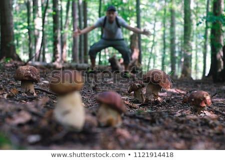 Man picking mushrooms Stock photo © photography33