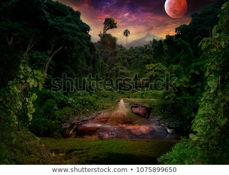 Night in jungle and moon Stock photo © dengess