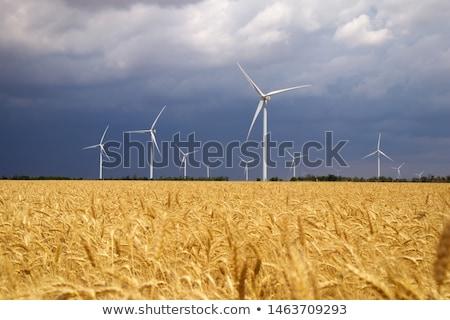Szélturbina búzamező szélturbinák vidéki gyönyörű kék ég Stock fotó © filmstroem