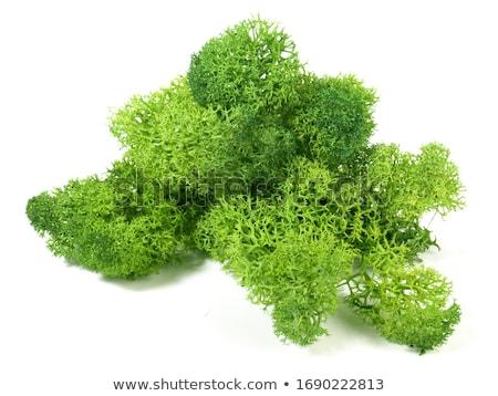 Yeşil yosun atış katı beyaz Stok fotoğraf © macropixel