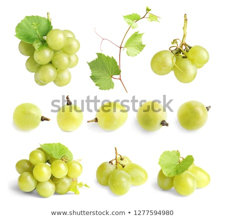 Green Grapes on the Vine Stock photo © emattil