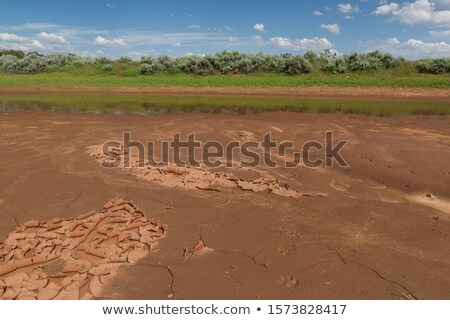 dry and cracked mud in dried up waterhole stock photo © ozaiachin