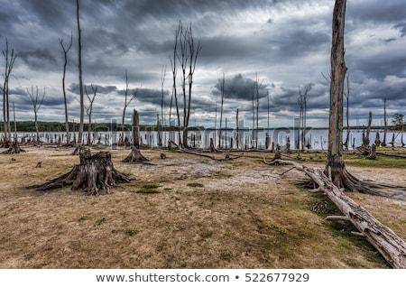Halott fák égbolt kidőlt fa absztrakt meztelen Stock fotó © pedrosala