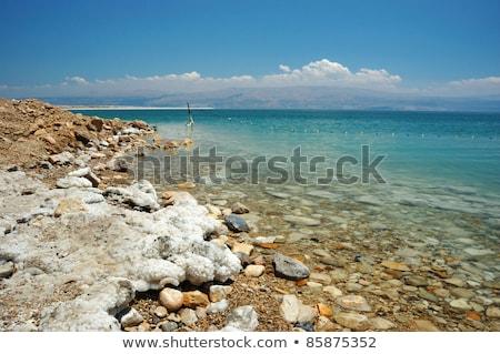 Morto arbusto mar morto coberto sal raso Foto stock © eldadcarin