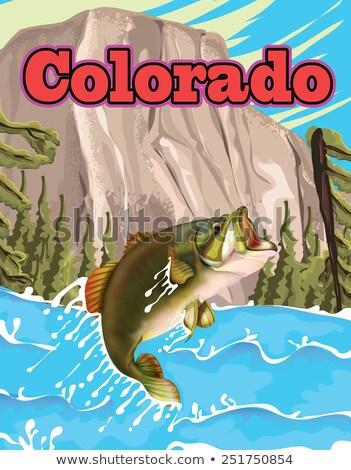 Sazan Colorado yüzme nehir Nevada ABD Stok fotoğraf © emattil
