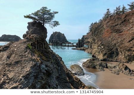 Oceaan wal park Oregon USA rock Stockfoto © snyfer