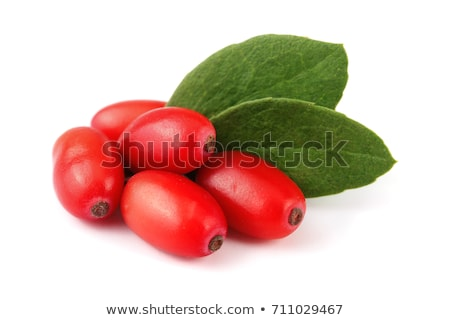red berries of barberry  Stock photo © vavlt