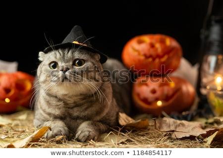 Foto stock: Halloween · gato · feliz · abstrato · fundo · outono