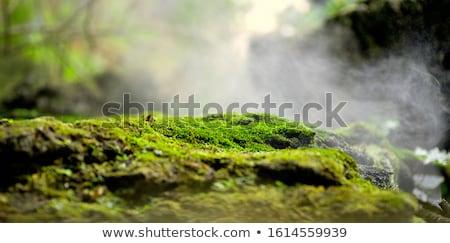 Heldere groene mos boomstam bos Stockfoto © hraska