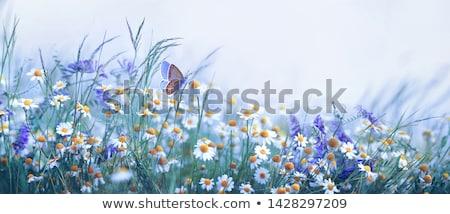 butterfly on purple white Flower Stock photo © stocker