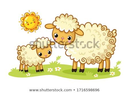 新しい · 生まれる · 子羊 · 小さな · 新しく · 草原 - ストックフォト © backyardproductions