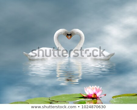 two swans in the nature of life Stock photo © OleksandrO