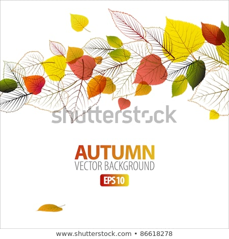 Autumn abstract floral background with place for your text Stock photo © orson