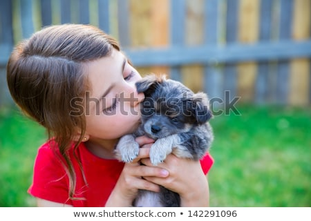 girl playing with puppy chihuahua pet dog stock photo © lunamarina