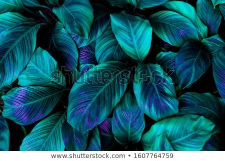 Flor tropical sonho palmeira flores calçada Foto stock © olandsfokus