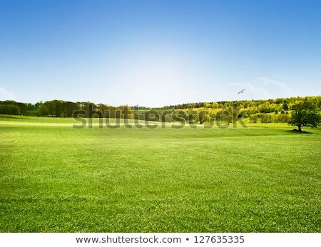 árvores gramíneo campo dois borda céu Foto stock © njnightsky