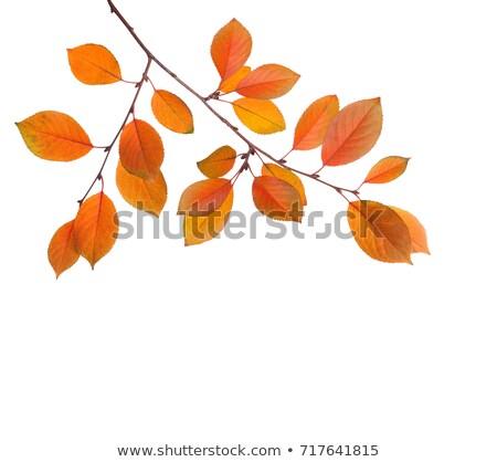 Saison d'automne jaune feuille branche illustration vecteur Photo stock © orensila