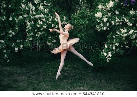 балерины цветы саду цветок природы красоту Сток-фото © tang90246