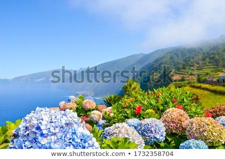 északi tengerpart Madeira nagy kő magas Stock fotó © compuinfoto