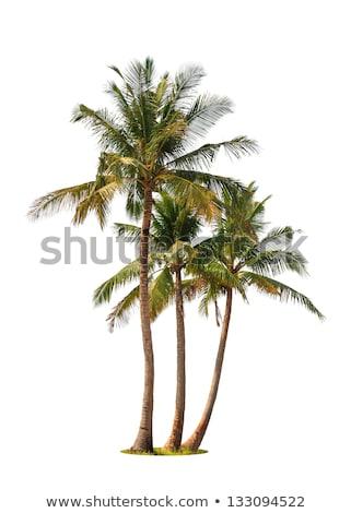 palmiye · soyut · detay · hurma · ağacı · siyah · beyaz - stok fotoğraf © digifoodstock