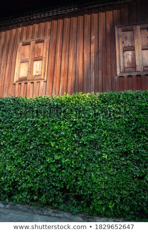 Wooden ladder by hedge Stock photo © IS2