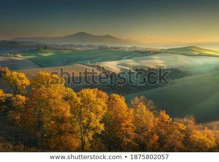 Włochy krajobraz cyprys drzew górskich Zdjęcia stock © Konstanttin