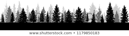 silhouette christmas trees snow scene background stock photo © krisdog